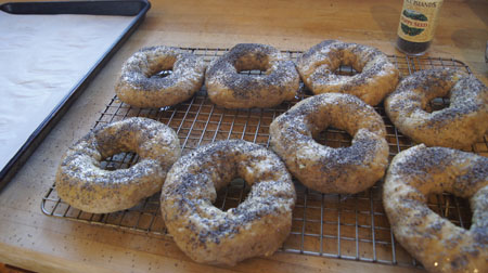 bagels ready for the oven