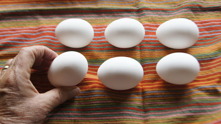 eggs close up