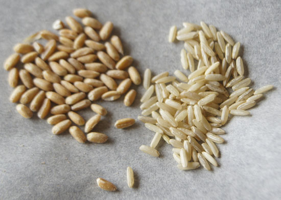 farro and rice